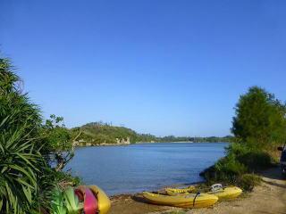 マングローブ河口