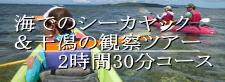 海のシーカヤック体験と干潟の観察