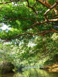 マングローブの入江