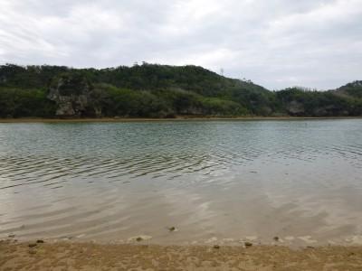 沖縄マングローブ