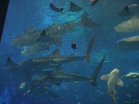 沖縄美ら海水族館 3/16より開館 カヤックの後は水族館へ