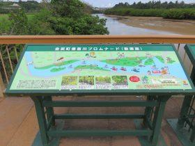 金武町億首川のマングローブをちょっとだけ見る機会がありました