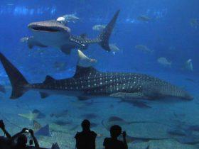 美ら海水族館は5月23日から6月20日まで臨時休館です